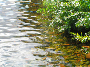 Ripples In Shallow Water - Germany