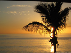 Water, Sunset And Palm Tree - Spain